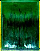 Green grass close up polaroid neg. ©mak - Stock Image - CWXT5C