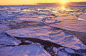 Melting sea ice, Antarctica - Stock Image - BF926J