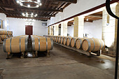 barrel aging cellar chateau trottevieille saint emilion bordeaux france - Stock Image - BEAW46
