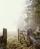A cold misty winters morning in the cotswolds near Yanworth with an open gateway - Stock Image - AXRG1C