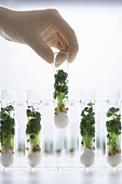 Person holding test tube containing cress seedlings - Stock Image - AKE14J