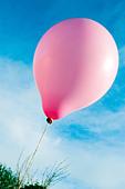 Single pink balloon - Stock Image - AAE7XK