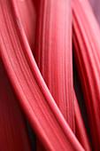 Closeup rhubarb texture - Stock Image - AX02XX