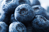 blueberries - Stock Image - DDD7WK