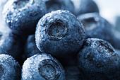 blueberries - Stock Image - DDD7WK