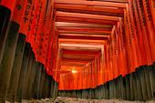 Torii gates Fushimi Inari Taisha Shrine Kyoto Honshu Japan - Stock Image - B19B8E