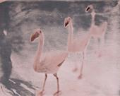 three pink flamingos yard ornaments, polaroid transfer, ©mak - Stock Image - D0RA02