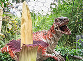 Titan Arum and dinosaur at Eden project - Stock Image - EX5YCE