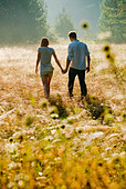 Young couple walking through field holding hands - Stock Image - BK7MT4
