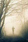 Male jogger on woodland footpath on misty morning - Stock Image - DT7E1M