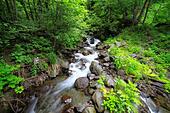 River in Caucasus mountains, near lake Ritsa, Abkhazia, Georgia - Stock Image - EFN9F5