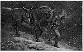 Wood Engraving: Going Home to Love in a Cottage, from Fun Magazine; a man leads a horse through the snow. - Stock Image - BNMPHG
