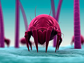 Dust mite, artwork - Stock Image - D652T0