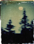 Night sky with trees and moon, polaroid transfer, ©mak - Stock Image - D0TTB8