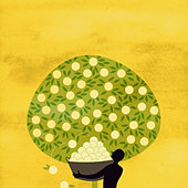 Man harvesting fruit from abundant tree - Stock Image - BMPFNK