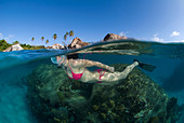 Snorkeling in Baths beach, British Virgin Islands, female diver, oval mask, bikini, blue water, clear water, snorkel, paradise - Stock Image - B72E7G