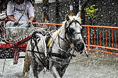 """A """"kalesa"""" (horse-drawn carriage) wades through flood water caused by tropical storm Fung Wong at a street in Manila, Philippines on 19 September 2014. Local governments have shut down schools and government offices, and a number of establishments suspended usual operations due to the widespread flooding in the Philippine capital and nearby provinces. (Photo by George Calvelo/NurPhoto) - Stock Image - E7JTPT"""