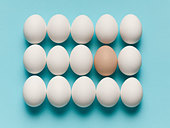 Brown egg with large white eggs - Stock Image - C90J4K
