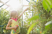 Little girl gardening in community greenhouse - Stock Image - DFDC1H