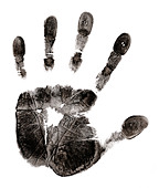 mans hand print - Stock Image - B9G0RJ