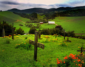 A memorial cross in a graveyard with rolling green fields - Stock Image - BDP3TA