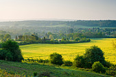 Countryside at Chilworth, Surrey, UK - Stock Image - C36Y0P