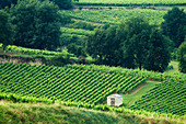 vineyard hut chateau gudeau saint emilion bordeaux france - Stock Image - BEAW06