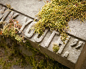 "Gravestone featuring the word ""Youth: covered in moss - Stock Image - C6J6AP"