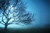 trees in the mist - Stock Image - B4KB55