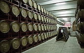 Oak barrels at the wine cooperative Aurora, Bento Goncalves, southern Brazil - Stock Image - AXD53N