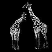 Two giraffes. Vector illustration. - Stock Image - DNKRK5