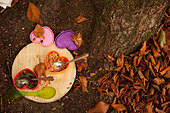 Directly above shot of lunch boxes on wooden board at camping site - Stock Image - E08AFB