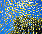 YELLOW & WHITE BUNTING AGAINST DEEP BLUE SKY AND TREE, RADIATING OUT FROM TOP RIGHT-HAND CORNER - Stock Image - CFH9T4