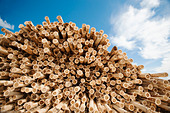 USA, Oregon, Boardman, Stack of timber against blue sky - Stock Image - C8THR0
