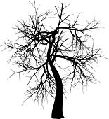 Silhouette of a winter tree - Stock Image - DNP3TH