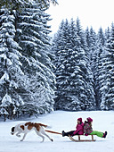 Dog pulling children on sled in snow - Stock Image - CW0FK6