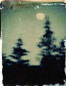 Night sky with trees and moon, polaroid transfer, ©mak - Stock Image - D7N79J