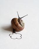 snail,snail pace,snail race - Stock Image - CYCN3X