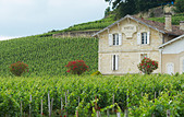 chateau pavie saint emilion bordeaux france - Stock Image - BEATYE