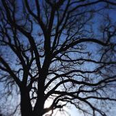 Tree Silhouette - Stock Image - S04XWY