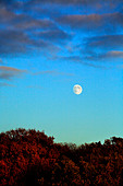 A full moon is in the sky above trees lit by the evening setting sun. An Autumn scene in England - Stock Image - AMTXMK