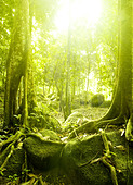 Green forest with ray of light - Stock Image - D0409K