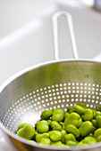 Broad Beans Draining in Colander - Stock Image - BR58CJ