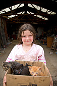 Young girl in rural Iowa, holding box of new kittens, Iowa, USA - Stock Image - B2H3H0
