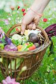 Hand picking up wooden basket of fresh produce - Stock Image - B65DKB