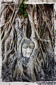Old tree roots wrapped around statue - Stock Image - BM03RB