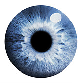 Eye - Stock Image - A06656