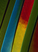 PARROT FEATHERS - Stock Image - B8C941