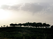 A line of trees on the horizon - Stock Image - BHT5NH