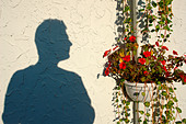 Shadow of a Man in Profile Near Red Geraniums Copy Space - Stock Image - APF75J
